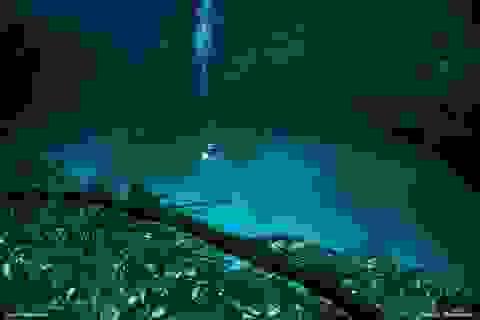 """""""Dòng sông"""" bí mật ở độ sâu 30m dưới nước"""