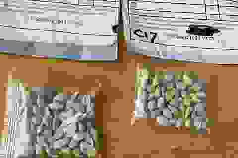 Ba Lan cảnh báo mối đe dọa từ các hạt giống lạ nghi từ Trung Quốc