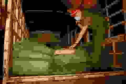 Lào Cai: Bắt giữ ô tô vận chuyển 2,8 tấn chân gà giáp biên giới Trung Quốc