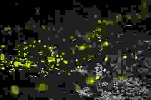 Ninh Bình: Lạc vào khu rừng đom đóm lung linh huyền ảo tựa chốn thần tiên
