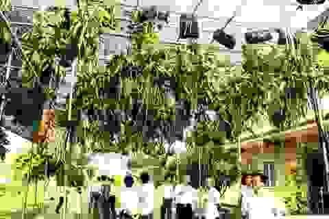 Bộ Nông nghiệp: Truyền thông tung hê lan tiền tỷ rất nguy hiểm