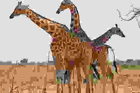 6 du khách ngoại quốc bị bắn chết trong công viên động vật hoang dã