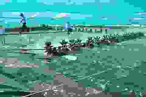 Việt Nam lần đầu tiên có trung tâm công nghiệp tôm