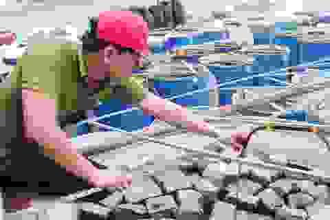 """Hà Tĩnh: Loại bỏ gần 400 hợp tác xã hoạt động """"lay lắt"""""""