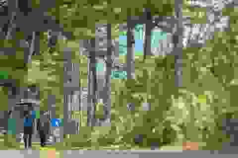 Mãn nhãn những con đường rợp bóng cây xanh ở Hà Nội