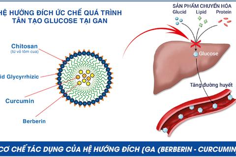 Nhà khoa học Việt khiến berberin thành thảo dượchỗ trợcho người đái tháo đường