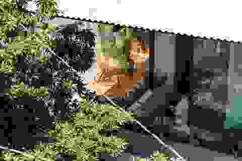 """""""Ngôi nhà ô"""" che nắng cả rừng cây giữa Sài Gòn khiến báo Mỹ khen hết lời"""