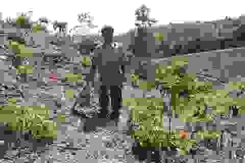 Nghịch lý ổn định dân cư tại Đắk Nông: từ dân định cư trở thành dân di cư