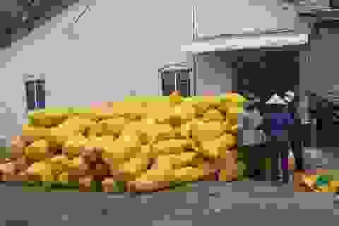 """Nông dân """"trúng quả"""" vì lúa được mùa, giá cao"""