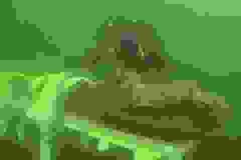 Phát hiện kinh ngạc về xác tàu đắm 'quái vật biển' 500 năm trước vừa được tìm thấy