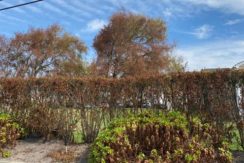 Hiện tượng lạ khiến cây cối trên đảo đổi màu, nửa héo úa, nửa xanh tươi
