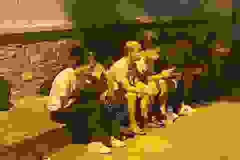 Bắt 116 người nhập cảnh trái phép trong 1 tháng trấn áp tội phạm
