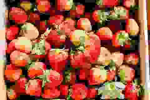 Những loại trái cây hàng đầu ngăn ngừa bệnh ung thư