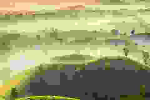 Đồi chè Phú Thọ nằm trong top ảnh thời tiết đẹp của năm