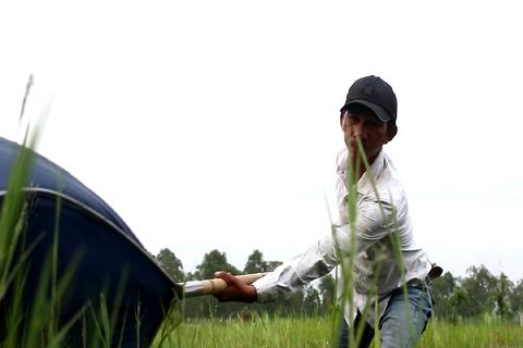Độc đáo nghề săn cào cào thu hàng chục triệu đồng mỗi tháng ở Sài Gòn