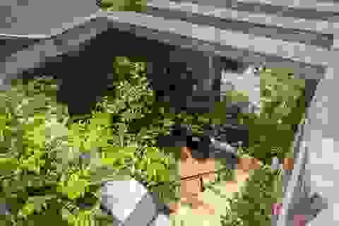 Nhà ống chống khói bụi vào bên trong như rừng nhiệt đới ở Bắc Ninh