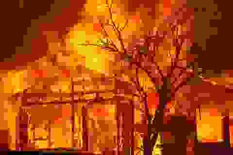 650 đám cháy rừng càn quét bang California, 7 người chết