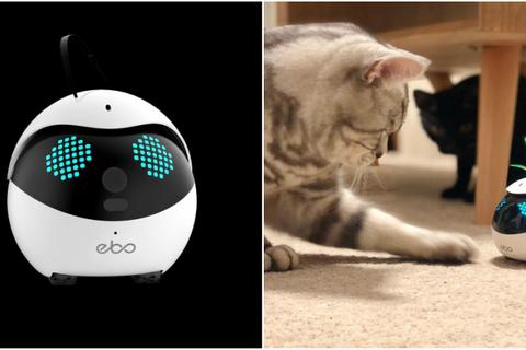 Công ty Trung Quốc chế tạo robot chơi với mèo khi chủ vắng nhà