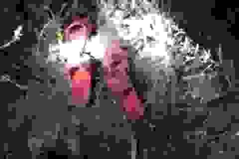 Người dân đổ ra sông tìm kiếm 2 cháu bé mất tích