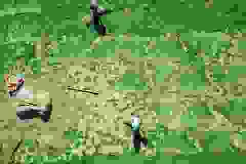 Vẻ đẹp thôn quê bình dị mùa thu hoạch cói ở 'ốc đảo' Hồng Lam