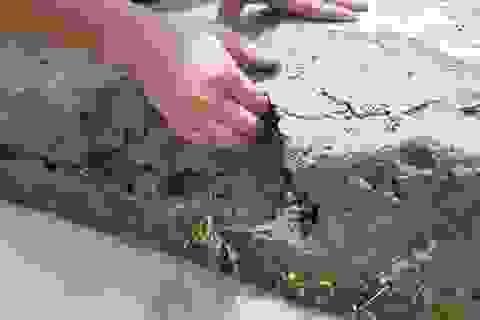 Kiểm tra thực địa dự án trăm tỷ đắp bùn nhão để trám bê tông tại Gia Lai