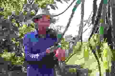 """Bắt vườn tạp """"đẻ"""" trăm triệu đồng/năm, thương binh thoát nghèo bền vững"""