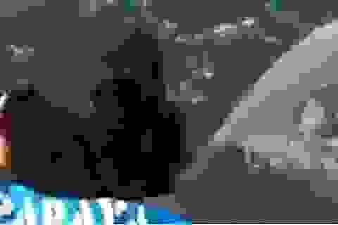 Màn giằng co chiến lợi phẩm quyết liệt của cá mập đầu búa và ngư dân