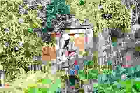 Rời Sài Gòn hoa lệ, chàng trai trẻ tới Đà Lạt dựng nhà, chăm cún, trồng hoa