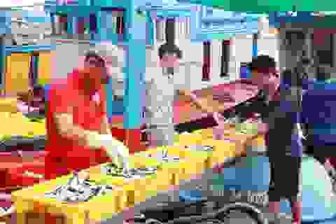 """Phú Yên: Cá nục """"tươi rói"""" cập cảng đem lại thu nhập cao cho ngư dân"""