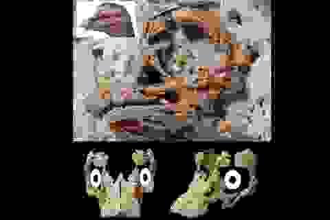 Lần đầu tiên tìm thấy hoá thạch phôi khủng long cực hiếm