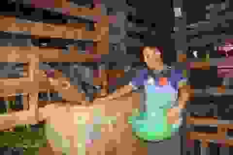 Đầu tư nuôi hươu nai ở vùng biên, chàng trai thu hàng trăm triệu đồng/năm