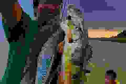 Về hồ Trị An trốn nóng Sài Gòn