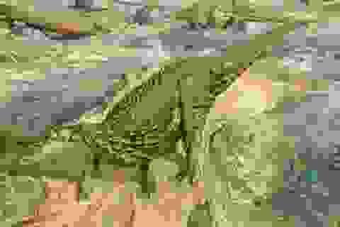 Bộ xương khủng long hoàn chỉnh duy nhất được ghép sau 160 năm