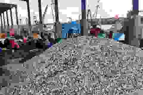 Cảng cá đứng trước nguy cơ bồi lắng vì hàng núi vỏ ốc bủa vây tại Nghệ An
