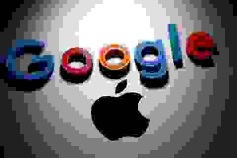 Apple phát triển công cụ tìm kiếm để cạnh tranh với Google