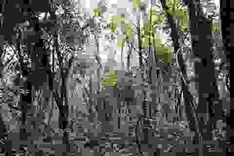 Quảng Trị: Phạt công ty du lịch hơn 300 triệu đồng vì phá rừng