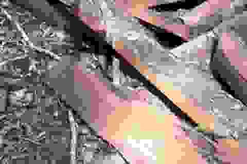 Vụ phá rừng di sản: 17 lâm tặc và 1 trạm trưởng kiểm lâm lãnh án