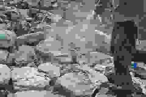 Tiêu hủy 24 tấn lòng cùng một số bộ phận của lợn nhiễm dịch tả lợn châu Phi