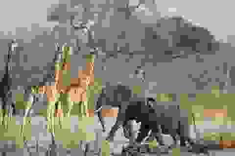 Người Zimbabwe lo công ty khai mỏ Trung Quốc tàn phá khu bảo tồn tự nhiên