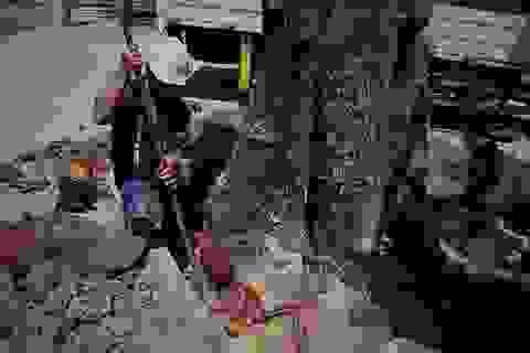 TPHCM: Đốn hạ cây xanh trước Hội trường Thống Nhất
