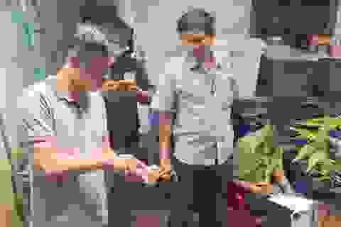 Khởi tố người đàn ông nuôi nhốt rùa quý hiếm nhiều nhất Tây Nguyên