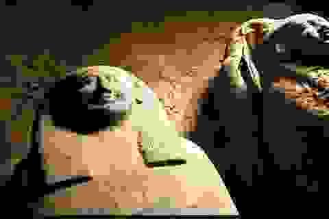 Ai Cập: Tìm thấy 13 quan tài chứa xác ướp nguyên vẹn 2.500 năm