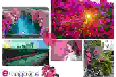 Ngắm thành phố xanh Ecopark đẹp mê mẩn trong mùa hoa giấy
