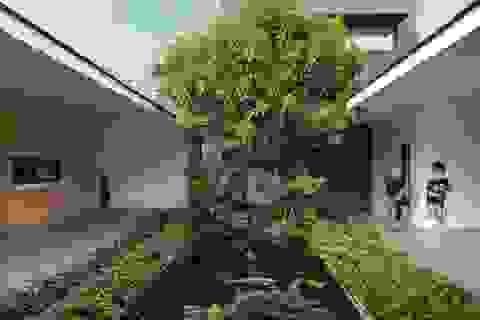 """""""Ốc đảo xanh"""" ẩn mình giữa 8 khối nhà trong căn biệt thự 1000m2 ở Sài Gòn"""