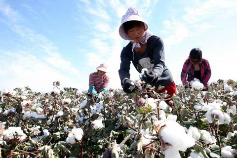 Mỹ sắp cấm nhập bông, cà chua từ Tân Cương