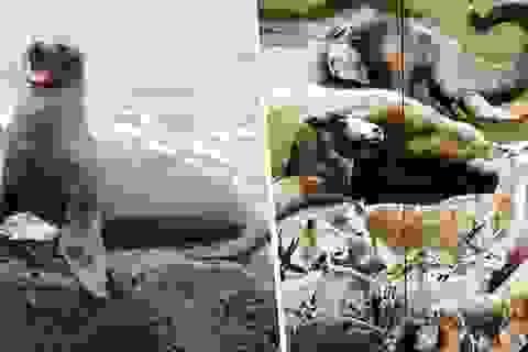 """Sự tuyệt chủng của động vật có vú đang tăng tốc đến """"làn sóng thứ hai"""""""