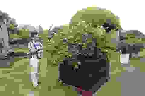"""Dàn sơ ri bonsai cổ thụ, trĩu quả giá tiền tỷ của """"tướng cướp hoàn lương"""""""