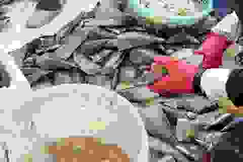 Mùa sò mai, chỉ đánh bắt gần ngư dân cũng kiếm tiền triệu mỗi ngày