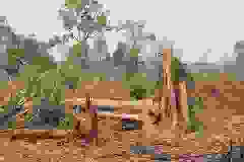 """Để """"mất"""" hàng trăm héc ta rừng, 2 trưởng ban quản lý bị khởi tố"""