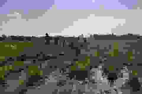 Diễn tiến phức tạp vụ hàng chục hộ dân bị chiếm dụng đất nông nghiệp